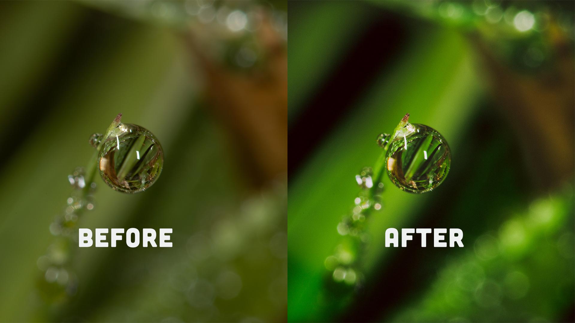 How to edit macro photography