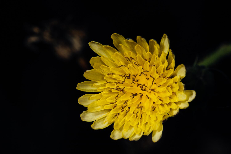 Macro photography ideas - Flowers